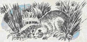 Сказка про храброго Зайца - длинные уши, косые глаза, короткий хвост - Алёнушкины сказки - Сказка Мамин-Сибиряк Д.Н. Рис. 1